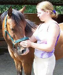Equine Massage in Surrey